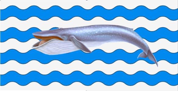 tabarnia ballena5